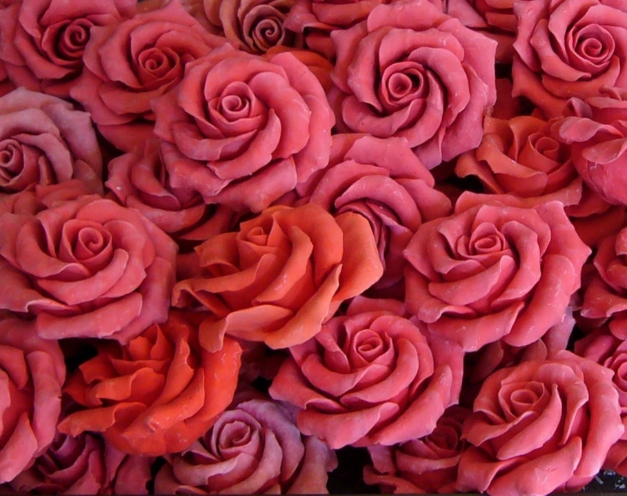 Roses for aromatherapy blog