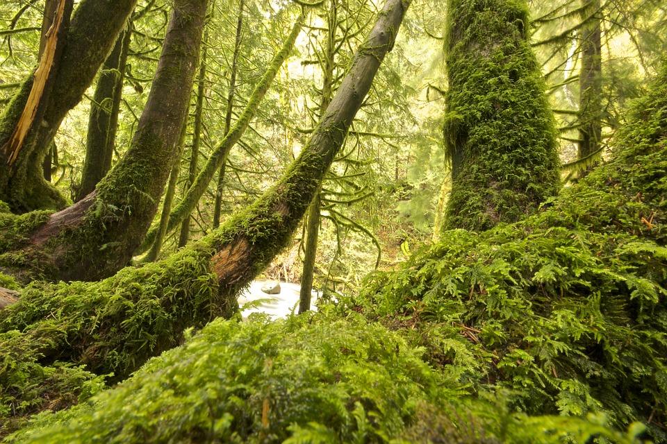 moist forest